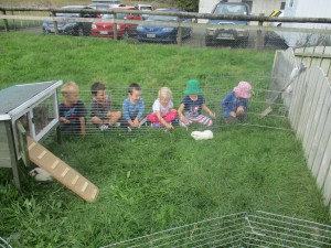 At the farm with the guinea pigs