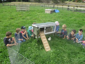 Room 2 children investigating our new friends' hutch at the farm.